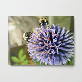 Lets Share! Metal Print
