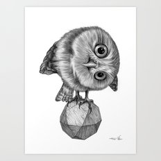 Pygmy Owl Art Print