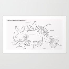 Anatomy of a Darter Art Print