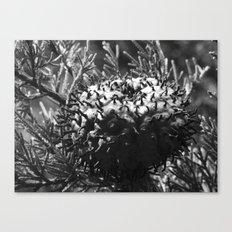 strange fungus 2017 IV Canvas Print
