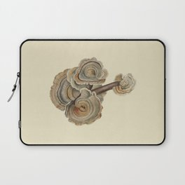 Polyporus versicolor Laptop Sleeve