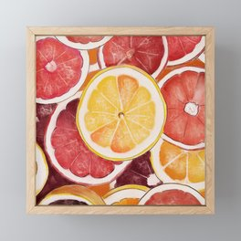 Citrus Painting Framed Mini Art Print