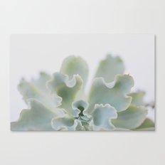 succulent 05 Canvas Print