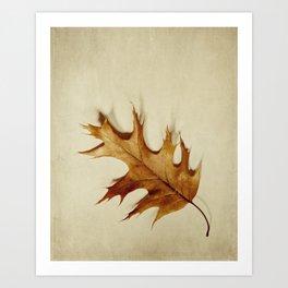 just a leaf Art Print
