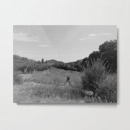 OAK GLEN (B+W) Metal Print