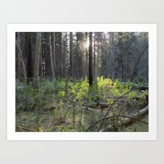Yosemite Morning Art Print
