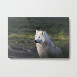 Canis Lupus Arctos II Metal Print