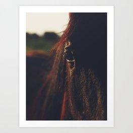 Horse photography, high quality, nature landscape fine art print Art Print