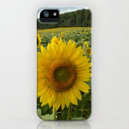 Sunflowers Bloom iPhone Case
