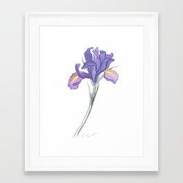 Iris 03 Botanical Flower * Lavender Purple Dutch Iris Framed Art Print