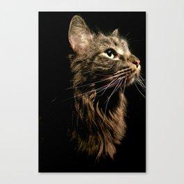 Cosmo In Profile Canvas Print