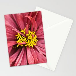 Close up of a pink chrysanthemum, with rain drops. Stationery Cards