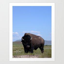King of the Plains Art Print