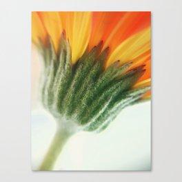 Spring vibes.. Canvas Print