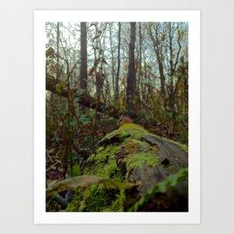 Woods walk Art Print