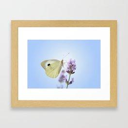 Butterfly 77 Framed Art Print