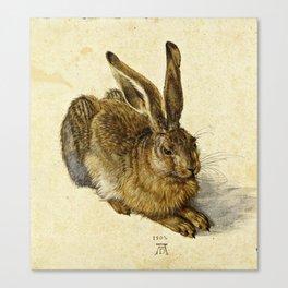 Albrecht Durer - Hare Canvas Print