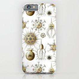 Ernst Haeckel - Phaeodaria iPhone Case