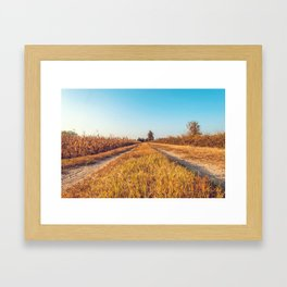 Country dirt road in Lomellina at sunset Framed Art Print