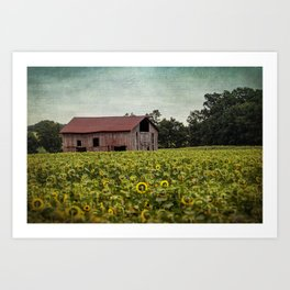 Sunflowers and old barn Art Print