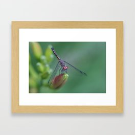 dragonflies are fairies in diguise Framed Art Print