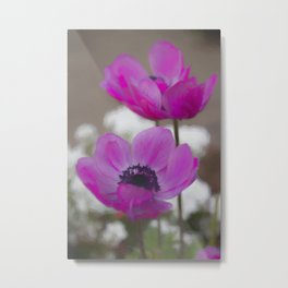 anemone coronaria in the garden Metal Print
