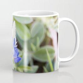 Texas Bluebonnet from Bud to Bloom Coffee Mug