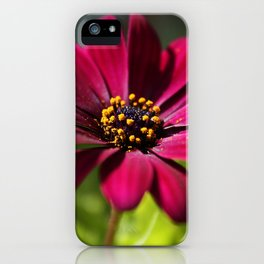 pink beauty iPhone Case