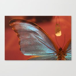 Butterfly 105 Canvas Print