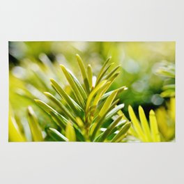 Yew Tree - New Growth Rug