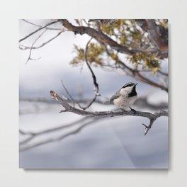 Winter Chickadee Metal Print