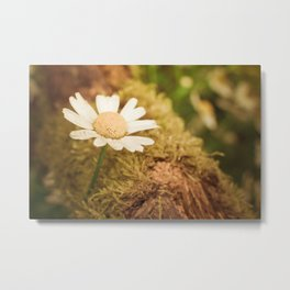 Daisy nature Metal Print