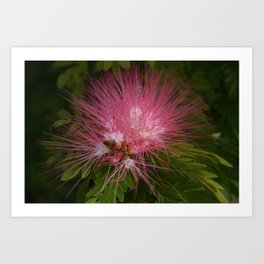 Powderpuff DPG161202a Art Print