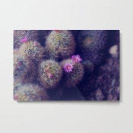 Little Cactus Flowers Metal Print