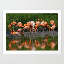 Flamingo Reflection Art Print