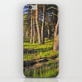 Dreaming Pine Trees in the Evening Light  iPhone Skin