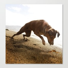 Dogs with the game face on .45 Canvas Print