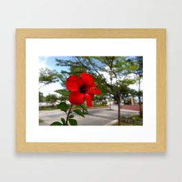 Red Flower Bloom Framed Art Print