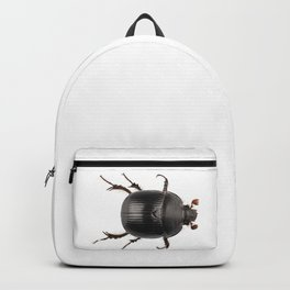 Earth-boring dung beetle species Geotrupes stercorarius Backpack