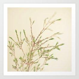 Waxflower Art Print