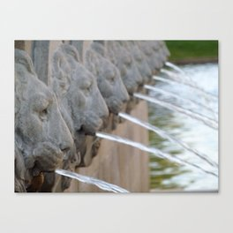 Lion Water Canvas Print