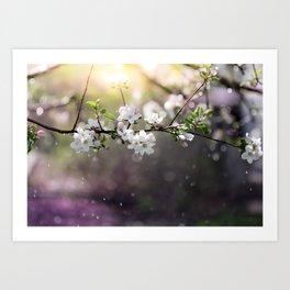 Spring magic Art Print