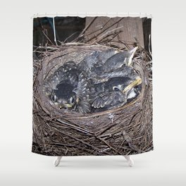 Baby robins in nest (fledglings) Shower Curtain