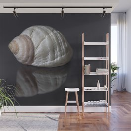 Seashell snail reflection Wall Mural
