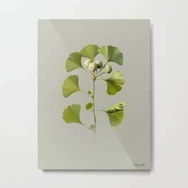 Ginkgo and Frog Metal Print