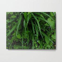 deep green dew I Metal Print