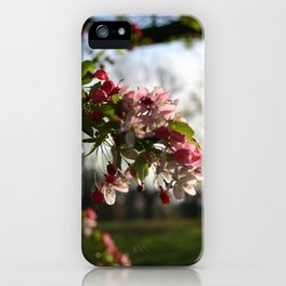 Pink Blossoms in the Warm Sun iPhone Case