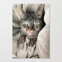 Cosy green-eyed cat Canvas Print