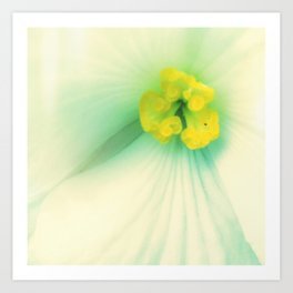 Begonia Beauty Art Print