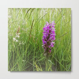 Flower. Southern Marsh Orchid (Dactylorhiza praetermissa) growing wild. Metal Print